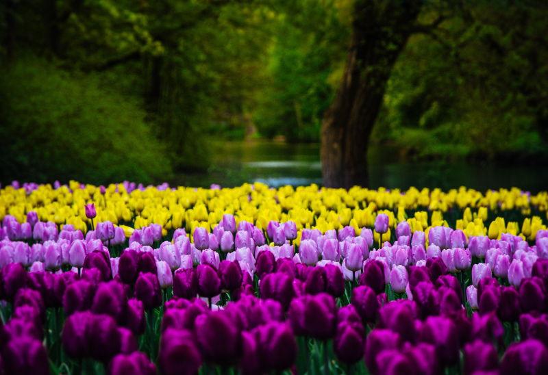 Primavera en Gallaecia